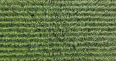 palouk : Aerial view of a corn field
