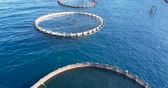 Aerial view of the cages of an aquaculture in the Mediterranean Sea