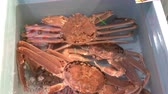 krab : Local alive Snow crab in water box for sale at Omicho Market, Kanazawa, Japan