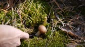 houby : Mushroom in the forest. A girl cuts a mushroom with a knife. Close-up.