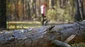 proteins : Girl gathers mushrooms in the forest. Defocus The tree in the foreground. Camera slide from left to right.