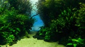 Timelapse 4k: Oceanarium with many different species of fish.
