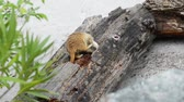 adapted : Meerkat or suricate, is small carnivoran belonging to mongoose family (Herpestidae).