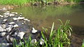 watercourse : Forest Stream In Summer On A Sunny Day Wide View 4K Stock Footage