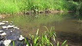 watercourse : Stream In Summer On A Sunny Day Wider View 4K