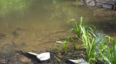 watercourse : Forest Stream In Summer 4K