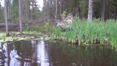 backwater : Forest swamp 4k Stock Footage