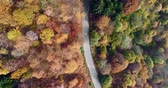 establishing shot : Overhead aerial top view following over road in colorful countryside autumn forest.Fall orange,green,yellow red tree woods.Street path establisher.4k drone flight straight-down establishing shot
