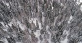 alto : Forward overhead vertical aerial above woods snowy forest.Cloudy bad overcast foggy weather.Winter Dolomites Italian Alps mountains outdoor nature establisher.4k drone flight establishing shot Stock Footage