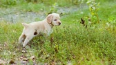 party : Puppy smells a grass on a green glade Stock Footage