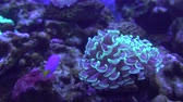 Tropical Coral reef, Underwater life. Anemones and Soft Corals, Vibrant Colors. Stock mozgókép