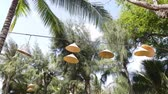 equipamentos de iluminação : Lamps with abages from Vietnamese caps hang on a wire among coniferous trees and palm trees. Summer time.