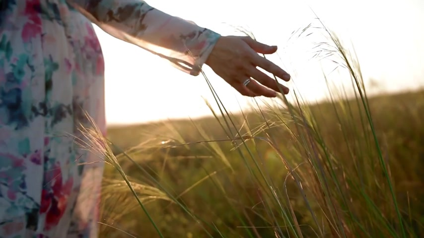 umma : Pregnant woman touch the spikelets on the meadow. Sunset light.
