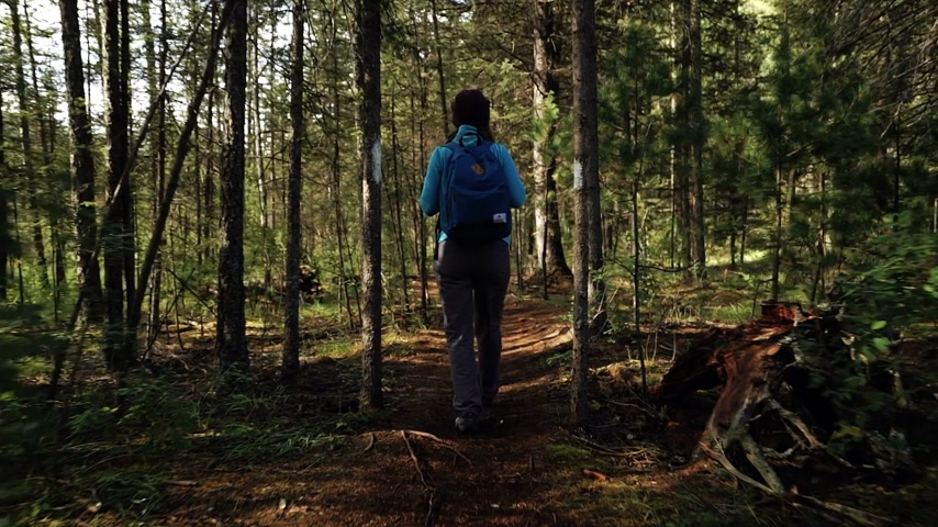 aventura : Young woman tourist with backpack is walking in the forest on sunny day. Back view