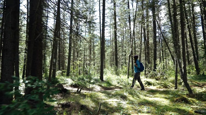 Young woman tourist with backpack is walking in the forest on sunny day. Long shot Wideo