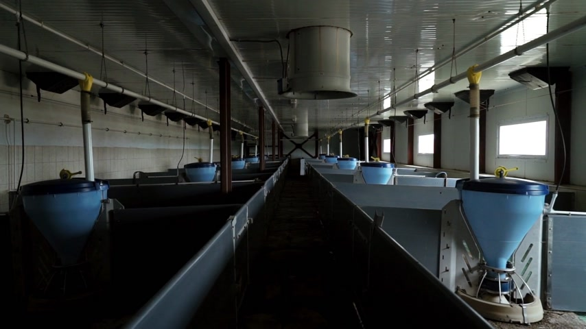 Interior of new empty pig farm with modern equipment for feeding livestock Wideo
