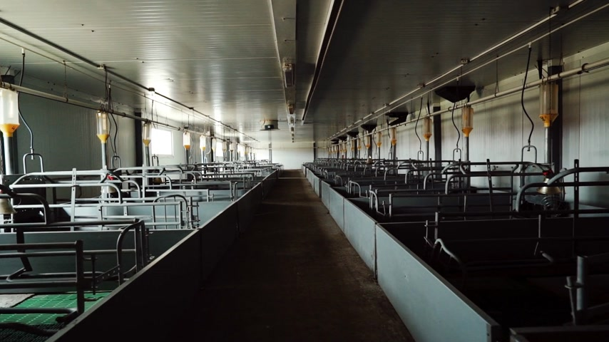 Maternity room is in empty modern industrial pig farm Wideo