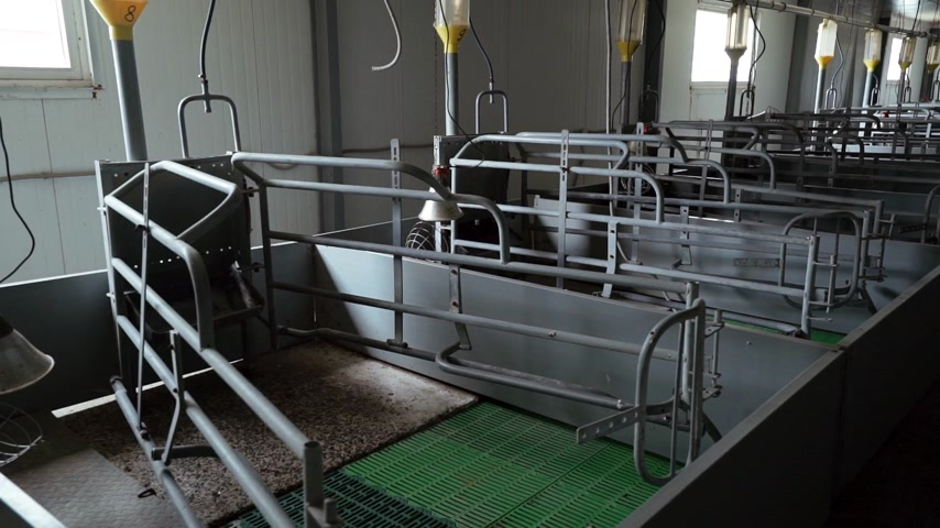 empty newest pens in maternity room are on modern industrial pig-breeding farm Dostupné videozáznamy