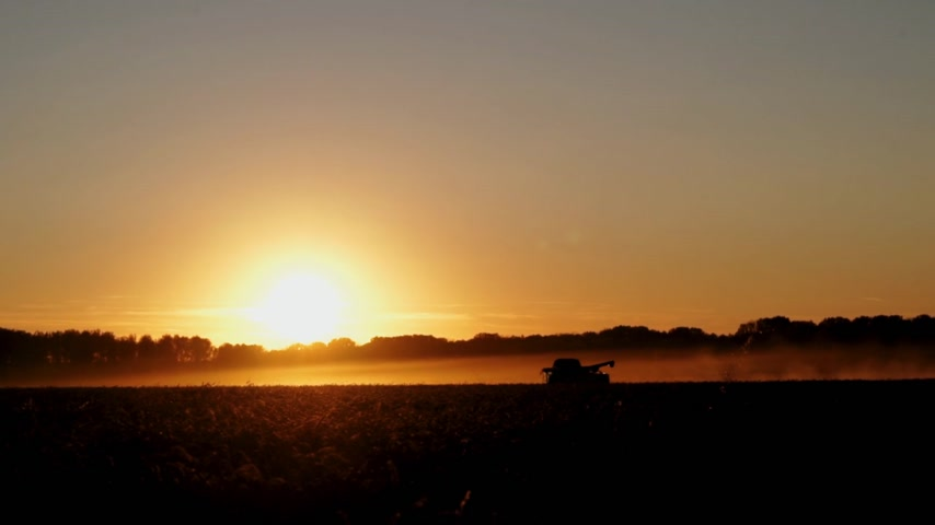 agricultural lands : silhouette of combines which harvesting wheat on the field on sunset, long shot