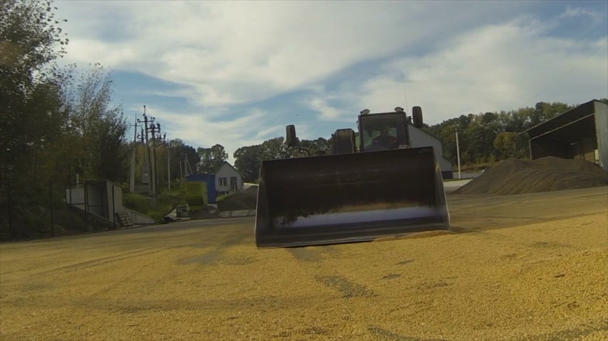 kukoricacső : Harvesting. Corn collected tractor. The camera enters the bucket with the grain.