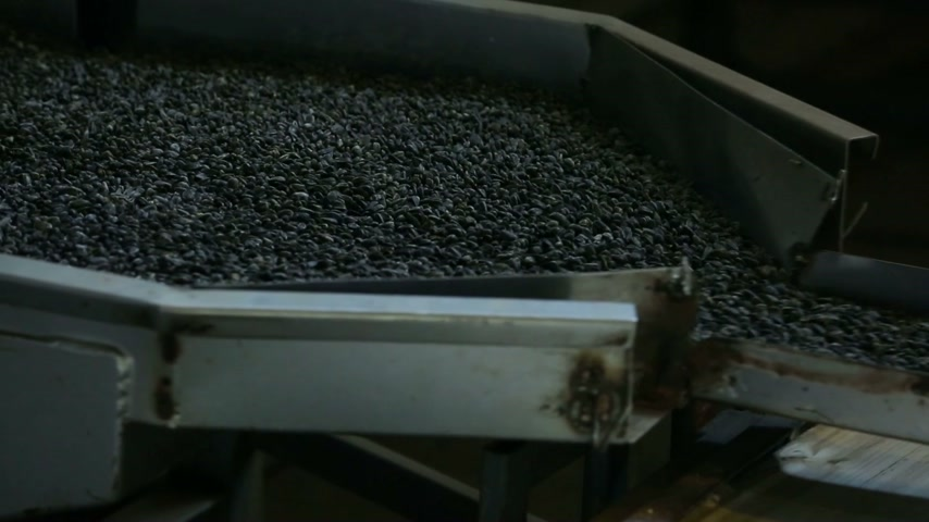 шелуха : Black sunflower seeds are poured on the production line. Factory. Стоковые видеозаписи