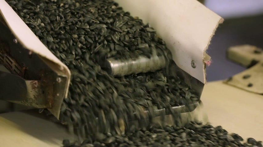 unload : Close-up. At the factory for the production of snacks, seeds are moving along the production line. Stock Footage