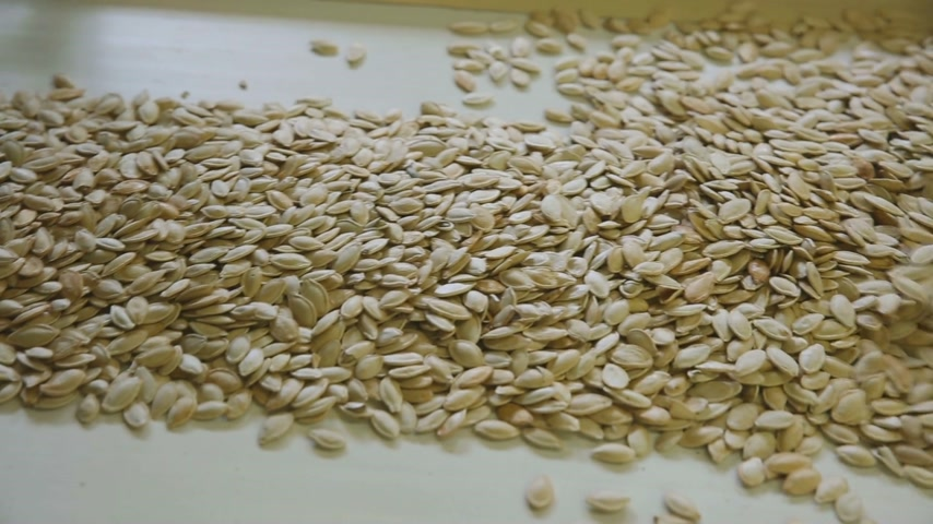 шелуха : Close-up. Pumpkin seeds are poured out on sorting lines. The worker goes over the seeds with her hands.