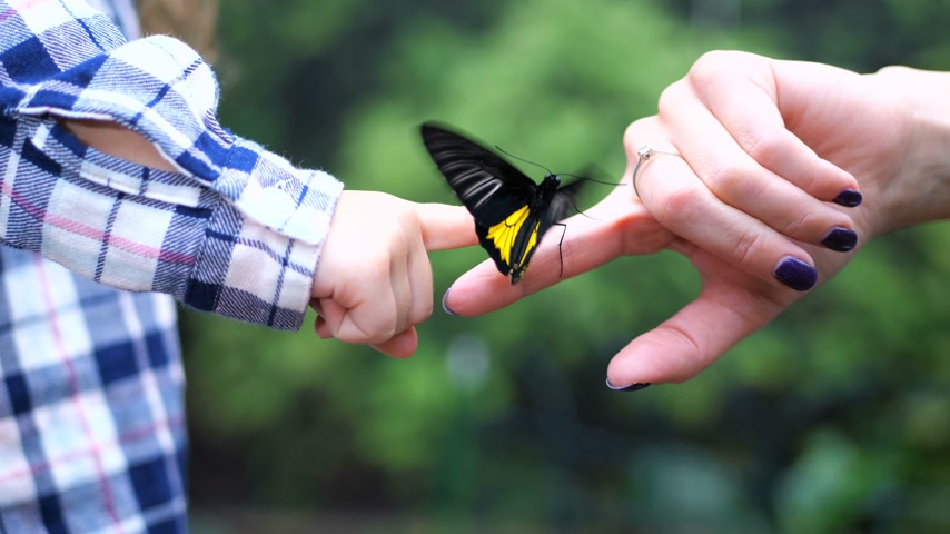 pulkanatlılar : A female hand transmits a live butterfly to a childrens hand. The butterfly beautifully flaps its wings. 4K Slow Mo