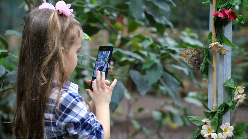 чешуекрылых : A little girl photographs a butterfly on the phone. 4K Slow Mo