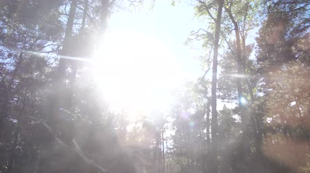 Green Forest. Shooting from the car, the sun breaks through the trees. Shooting in motion. 4K Slow Mo