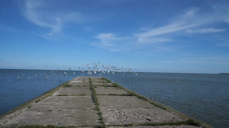 Beautiful blue sea pier, moving forward. Gulls fly to the sides. 4K Slow Mo