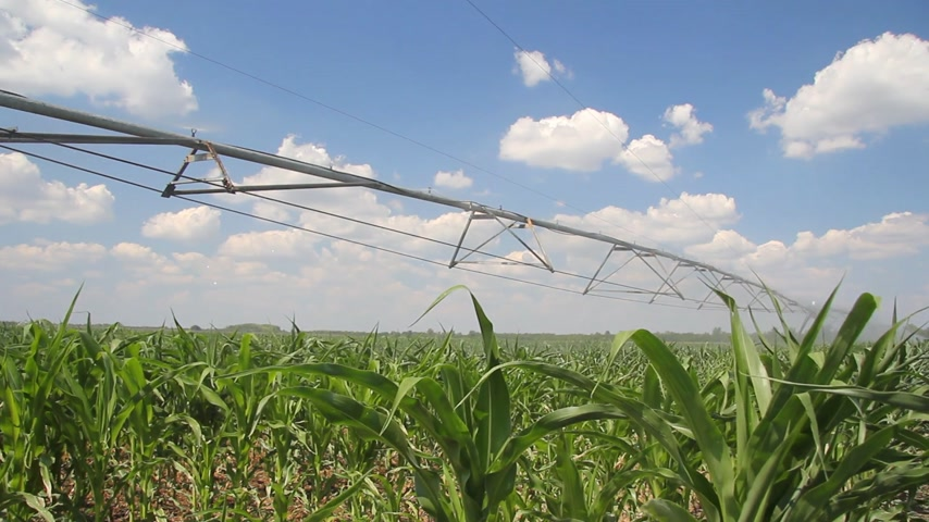 irrigação : Irrigation of corn fields
