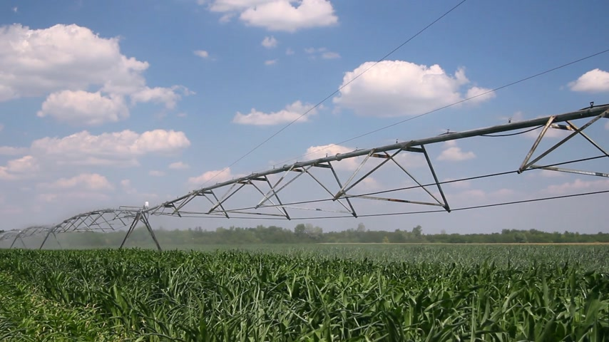кукуруза : Irrigation of corn fields