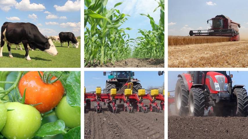 industry : Agriculture, Food Production Collage