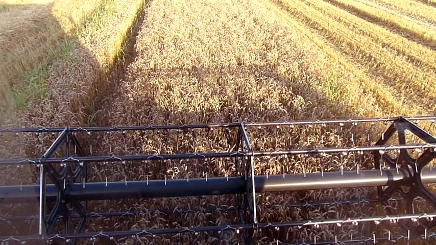 tohum : Wheat harvest, Combine in action slow motion Stok Video