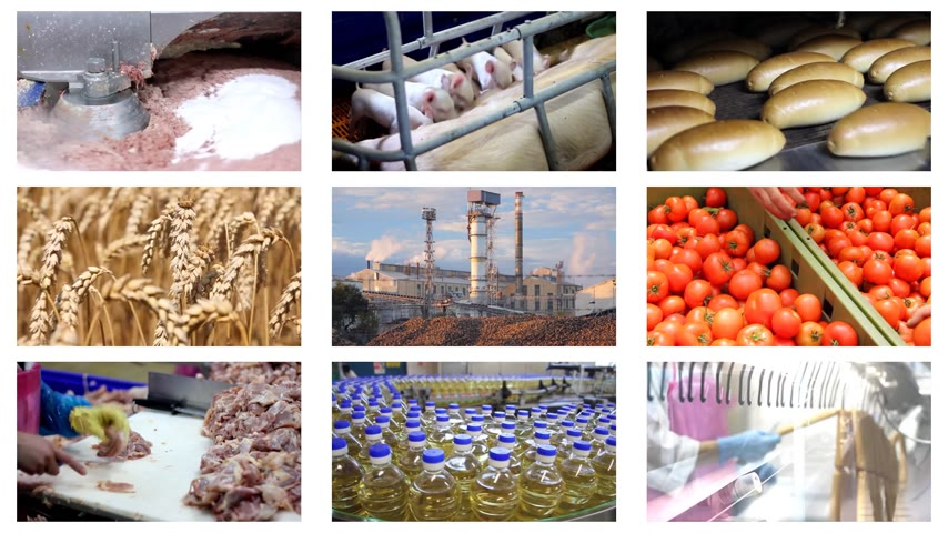 üretim : Food production, sugar factory, processing of corn, soybeans, wheat, green beans, bakery, dairy farm, poultry meat, pigsty, hot dogs, tomato, cucumber, vegetables, chicken farm. Split screen, several different footages in collage Stok Video