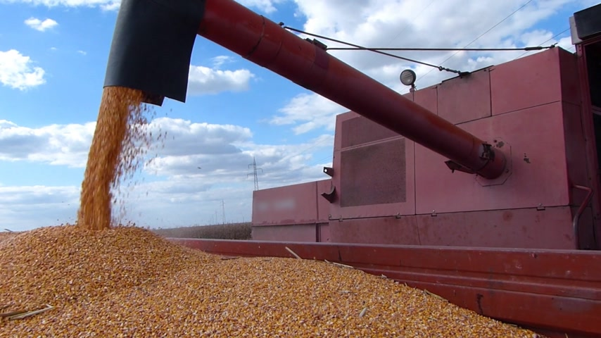 кукуруза : Combine harvesting corn and unloading into a trailer