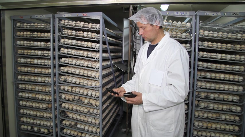 farm equipment : Man calculating earnings on chicken farm eggs