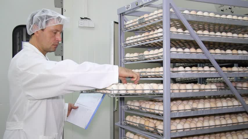 farm equipment : Farmer controls chicken eggs in incubator