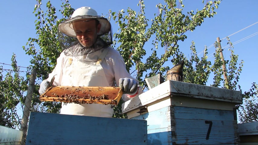 pomar : Beekeeper and bees in the hive
