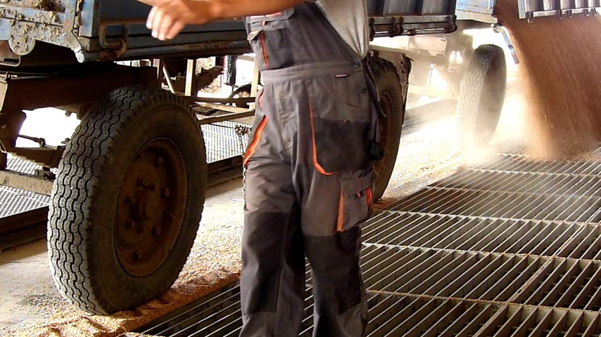 trator : Farmer unloading wheat in a silo after harvest, slow motion Vídeos