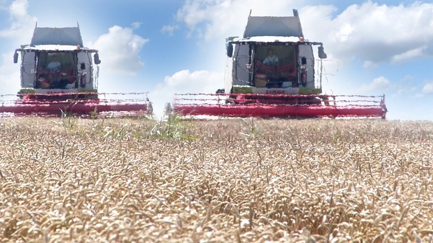 farm equipment : Two combine harvesters working on wheat field