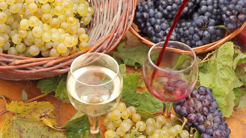 alcohol : Wine Tasting In A Vineyard Stock Footage