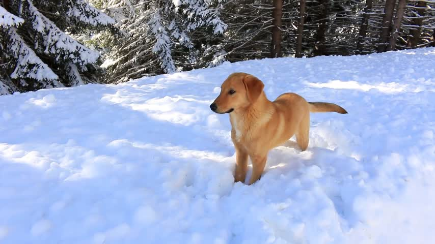 zmrazit : Play with a dog in the snow