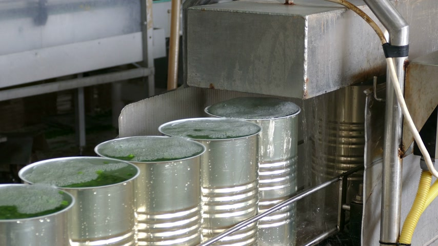enlatamento : Green peas in food processing factory, packing in metal cans
