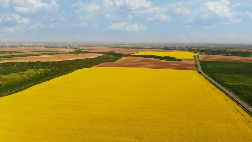 szépen : Aerial drone shot of beautiful yellow oil seed rape flowers in the field, countryside landscape