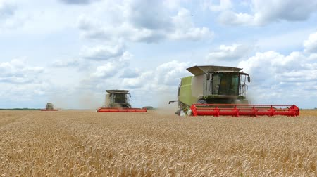reaping : Three combine harvesters working on the wheat field
