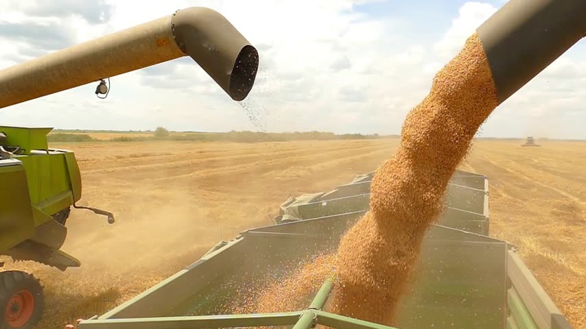 Combine harvesters transferring freshly harvested wheat to tractor-trailer for transport, slow motion Stock mozgókép