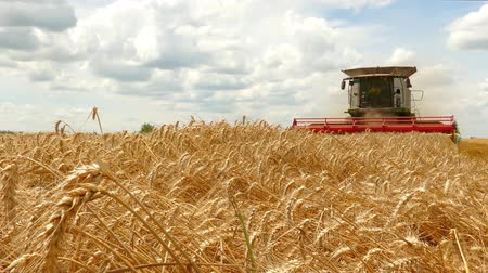 hozam : Combine harvester working on the wheat field Stock mozgókép