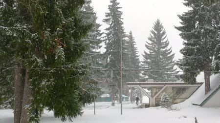 námraza : Winter landscape with spruce fir trees, rural scene and snowflakes on the mountain Dostupné videozáznamy